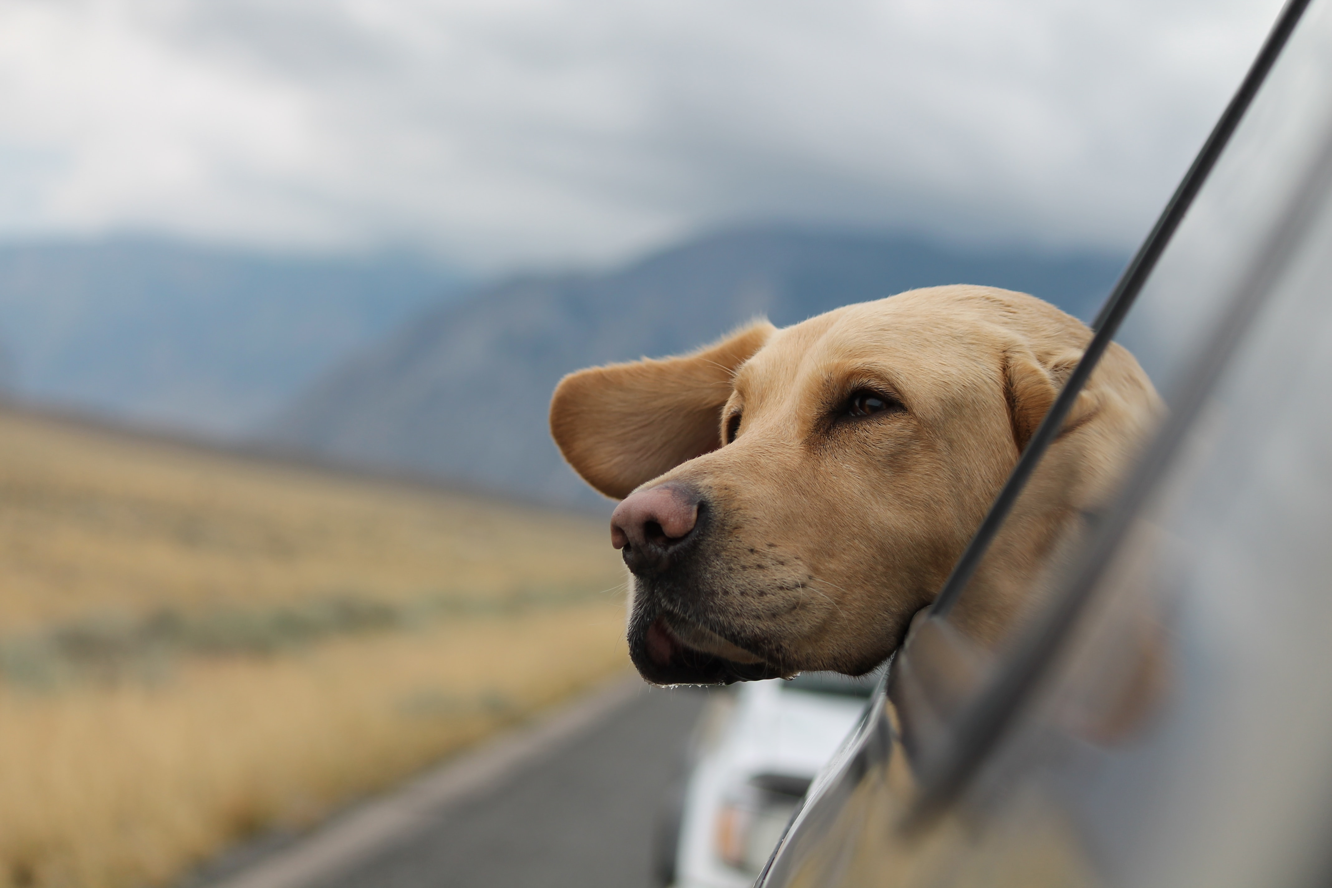 Thinking about your pet companion(s) and the places you will visit will keep everyone happy!
