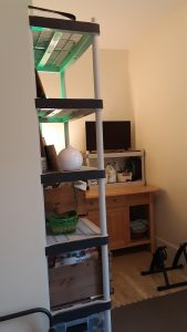 The laundry and rug removed, and shelves put into place